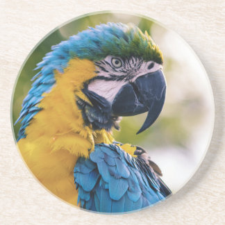 Yellow Blue Macaw Parrot Coaster