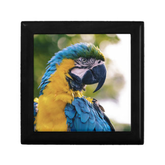 Yellow Blue Macaw Parrot Gift Box