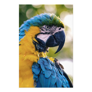 Yellow Blue Macaw Parrot Personalized Stationery