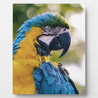 Yellow Blue Macaw Parrot Plaque