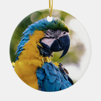 Yellow Blue Macaw Parrot Round Ceramic Decoration