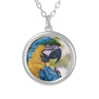 Yellow Blue Macaw Parrot Round Pendant Necklace