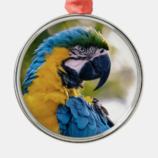 Yellow Blue Macaw Parrot Silver-Colored Round Decoration