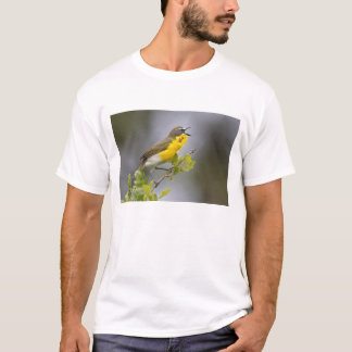 Yellow-breasted Chat (Icteria virens) singing on T-Shirt