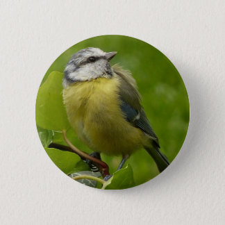 Yellow Breasted Robin 6 Cm Round Badge