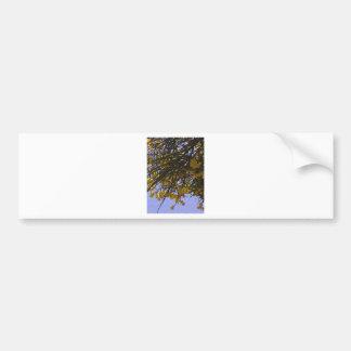 Yellow Broom Bumper Sticker