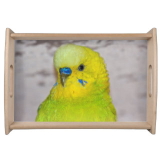 Yellow Budgie Serving Tray