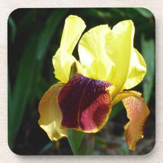 Yellow & Burgundy Iris Plastic Coasters (set of 6)