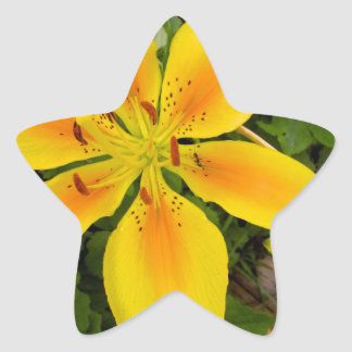 Yellow Burst Star Stickers
