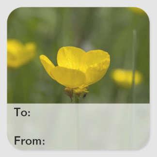 Yellow Buttercup Flowers Sticker
