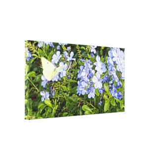 Yellow Butterfly Lavender Blue Plumbago Flowers Canvas Print