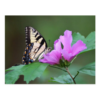 Yellow Butterfly on Pink Posies Postcards