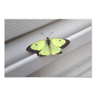 Yellow Butterfly Photo Art