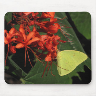 Yellow butterfly, red flowers mousepad