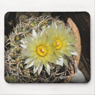 Yellow Cactus Blooms Mouse Pads