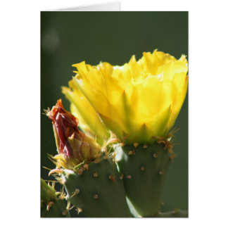 YELLOW CACTUS BLOSSOM GREETING CARD