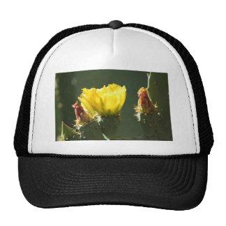 YELLOW CACTUS BLOSSOM MESH HATS