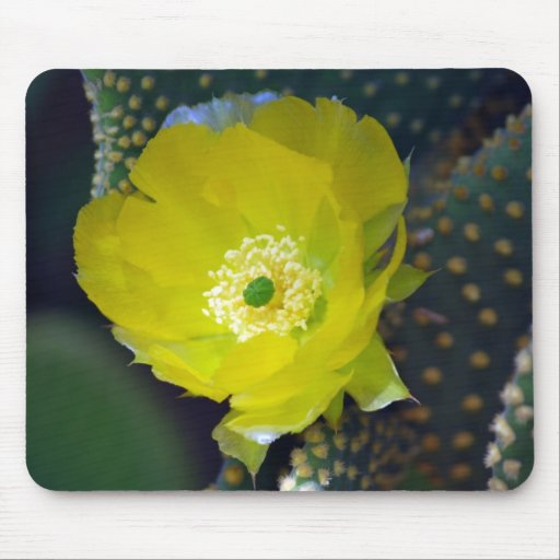Yellow cactus flower and meaning mousepads