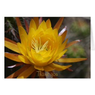 Yellow cactus flower card