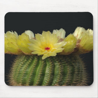 Yellow Cactus Flower Mousepads