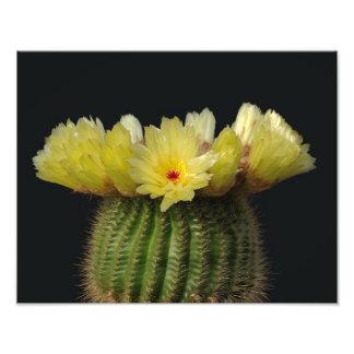 Yellow Cactus Flower Photograph