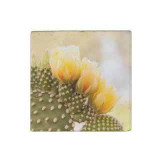 Yellow cactus flowers as they bloom in  Arizona Stone Magnet