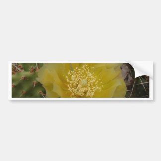 Yellow Cactus In Bloom Bumper Stickers