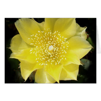 Yellow Cactus Prickly Pear Flower Greeting Card