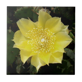 Yellow Cactus Prickly Pear Flower Small Square Tile