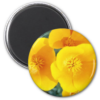 yellow California poppies in full bloom flowers 6 Cm Round Magnet