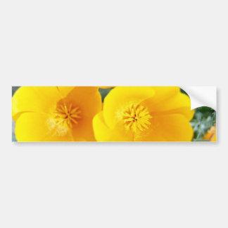yellow California poppies in full bloom flowers Bumper Sticker