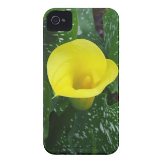 Yellow Calla iPhone 4 Case