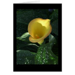 Yellow Calla Lily Blank Notecard Cards