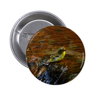 Yellow Canary bird bathing Pinback Buttons