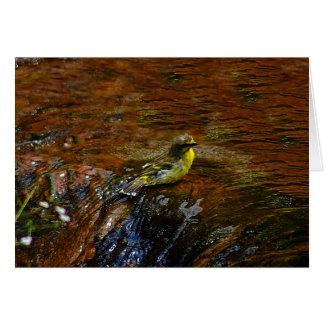 Yellow Canary bird bathing Greeting Card