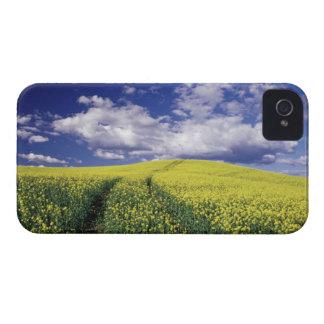 Yellow canola in Whitman County Washington state iPhone 4 Case