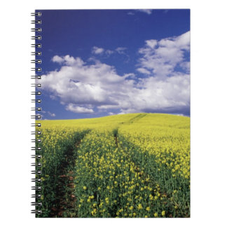 Yellow canola in Whitman County Washington state Notebook