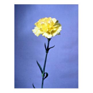 Yellow carnation postcard