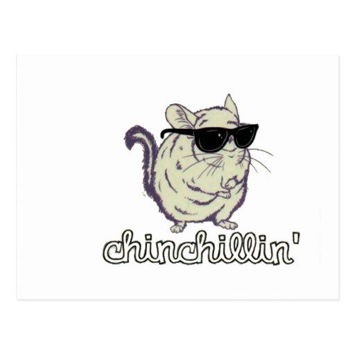 Yellow Chinchillin Chinchilla Post Card