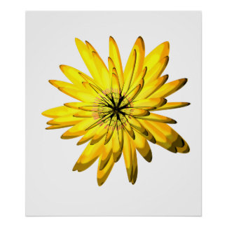 Yellow Chrysanthemum Flower Illustration Print
