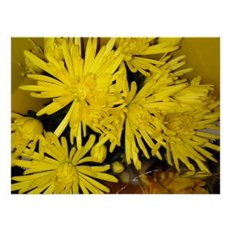 Yellow Chrysanthemum Flowers Poster