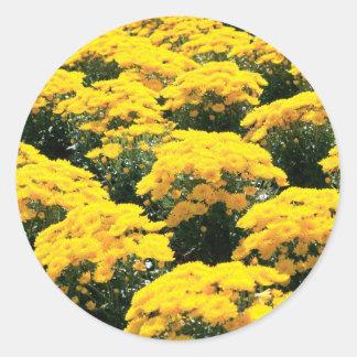 Yellow Chrysanthemum Flowers Sticker