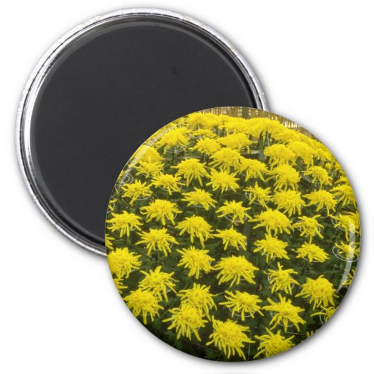 yellow Chrysanthemums in Japanese garden, Japan fl 6 Cm Round Magnet