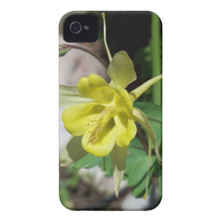 Yellow Columbines Case-Mate iPhone 4 Cases