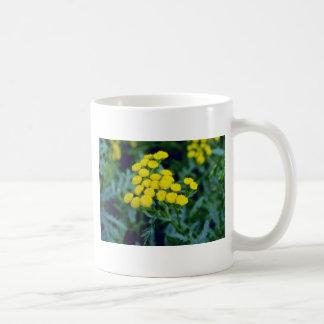 yellow Common Tansy Tanacetum Vulgare Tanaisie f Mug