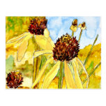 yellow coneflower post cards