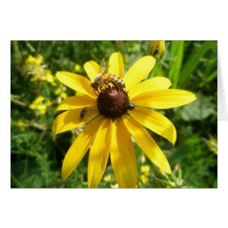 Yellow Coneflower with Insects Note Card