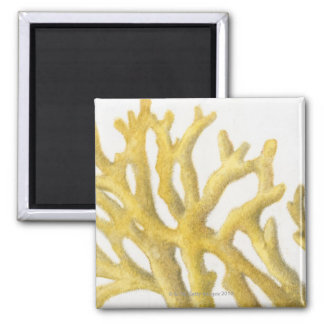 Yellow Coral Square Magnet