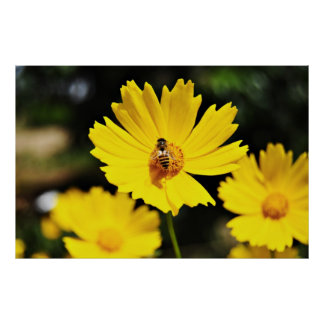Yellow Cosmos Flower and Bee Poster