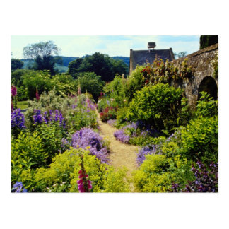 Yellow Cotswold garden flowers Postcards